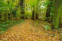 Skog i höst. Arkivbilder
