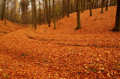 Skog i höst. Royaltyfri Bild