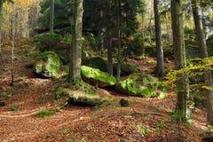 Skog i höst Arkivbild