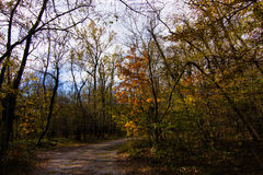 Skog i höst fotografering för bildbyråer