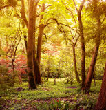 Skog i höst royaltyfria bilder