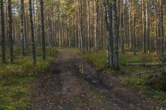 Skog i höst Arkivfoto