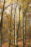 Skog i höst royaltyfri fotografi