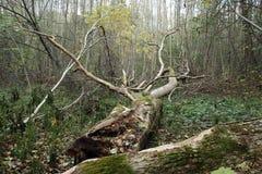 Skog i höst Royaltyfri Foto