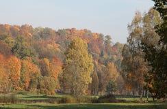Skog i höst Gauja nationalpark arkivfoto
