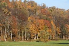 Skog i höst Gauja nationalpark arkivbild