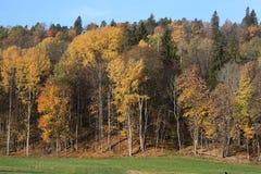 Skog i höst Gauja nationalpark arkivfoton