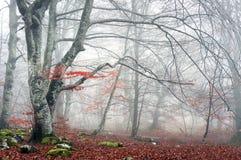 Skog i höst med dimma royaltyfria bilder