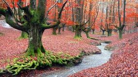 Skog i höst med en ström arkivfoto