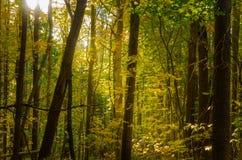 Skog i höst med en Sumbeam Filterigh till och med filialerna Royaltyfria Foton