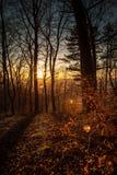 Skog i höst med röd lövverk Arkivbild