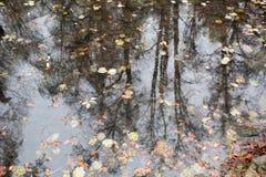Skog i höst med reflexion i vatten som beströs med den stupade betesmarken Royaltyfria Bilder