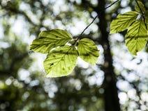 Skog i höst - solbelysta sidor royaltyfria bilder