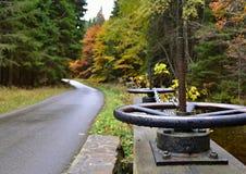 Skog i höst - väg i skog Arkivfoto
