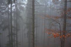 Skog i höstdimman Royaltyfria Foton