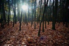 Skog i hösten Royaltyfria Foton