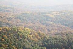 Skog i hösten Royaltyfri Fotografi