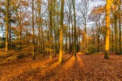 Skog i höstfärger royaltyfri fotografi