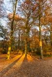 Skog i höstfärger arkivfoton