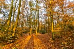 Skog i höstfärger royaltyfria bilder