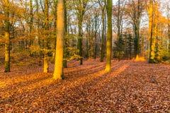 Skog i höstfärger fotografering för bildbyråer