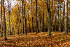 Skog i höstfärger arkivfoto