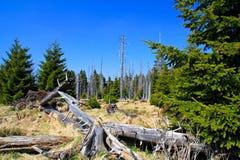 Skog i Harzen Fotografering för Bildbyråer