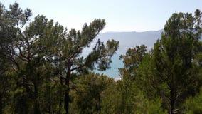 Skog i himmel royaltyfria bilder