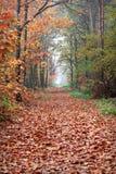 Skog i höst Arkivbilder