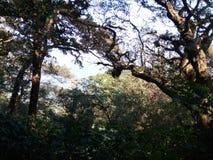 Skog i Indien Arkivfoto