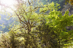 Skog i klyftan Royaltyfria Foton