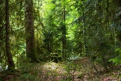 Skog i klyftan Royaltyfri Foto