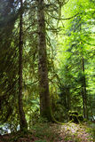 Skog i klyftan Arkivfoto