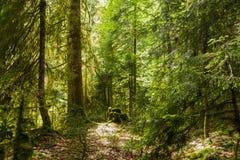 Skog i klyftan Royaltyfri Bild