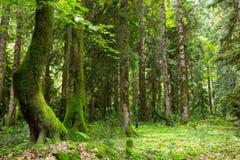 Skog i klyftan Fotografering för Bildbyråer