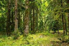 Skog i klyftan Arkivfoton