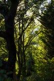 Skog i Luberon i söderna av Frankrike Arkivbilder