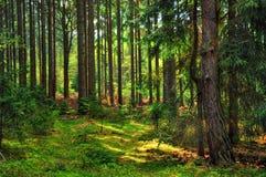 Skog i mellersta Europa arkivfoto