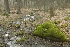 Skog i misten Fotografering för Bildbyråer