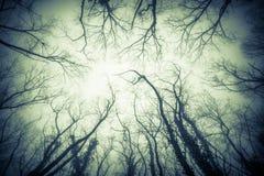 Skog i misten royaltyfri bild