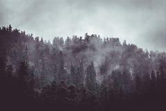 Skog i misten arkivbilder