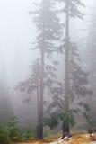 Skog i misten på sent fal Arkivbilder