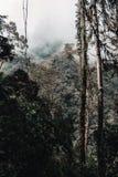 Skog i mitt av berg på en molnig morgon fotografering för bildbyråer