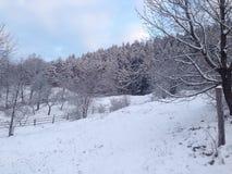 Skog i morgon Royaltyfria Bilder