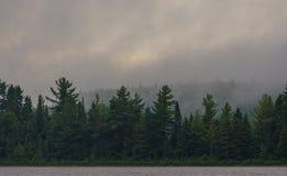 Skog i morgondimman vid sjön Royaltyfri Foto
