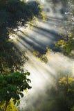 Skog i morgonen Royaltyfria Foton
