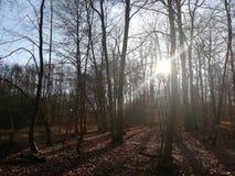 Skog i morgonen royaltyfria bilder