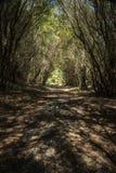 skog i Munmorah tillståndsnaturvårdsområde royaltyfri fotografi