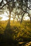 skog i Munmorah tillståndsnaturvårdsområde royaltyfri foto