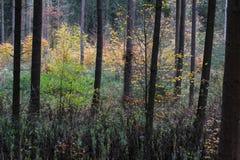 Skog i nedgång Royaltyfri Bild